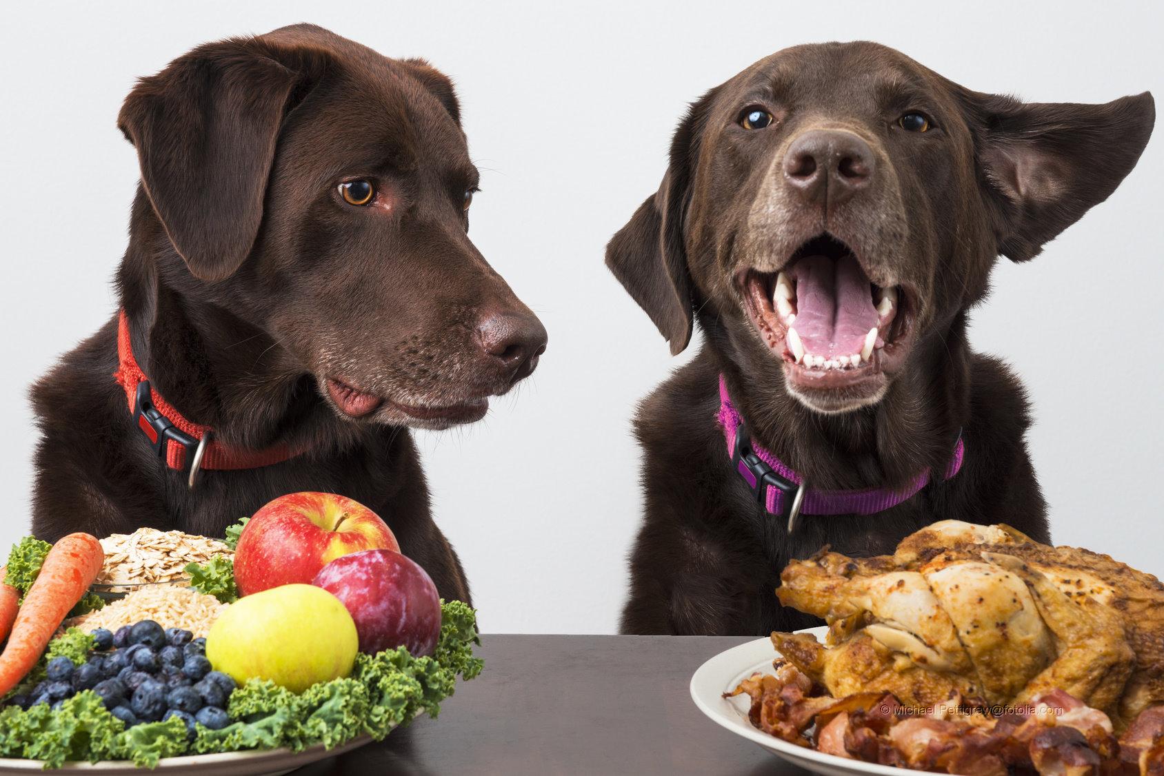 Du bist was du isst – Mit richtiger Ernährung zum Erfolg