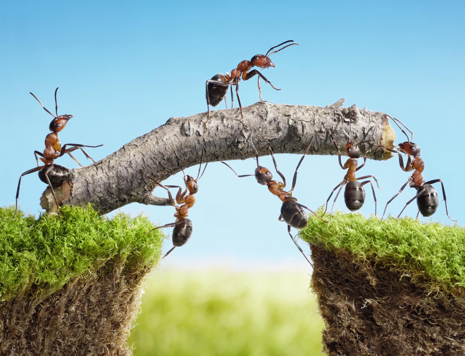 Teambuilding und  Teamwork